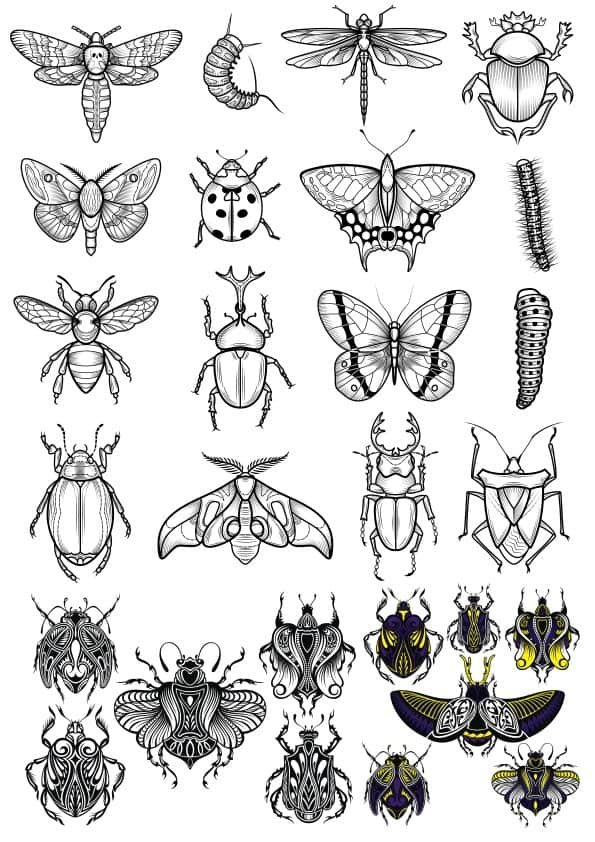 Insect set (cdr)