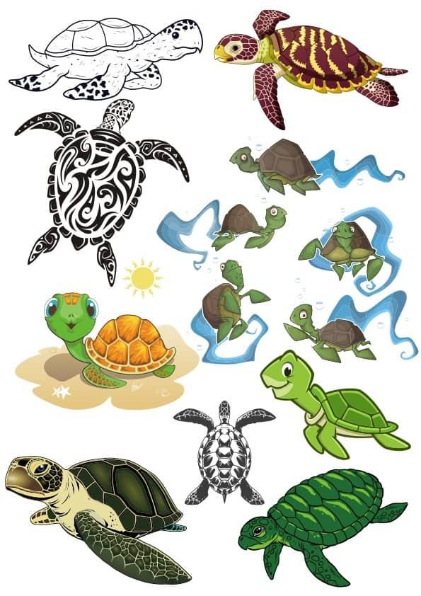 Turtle set (cdr)