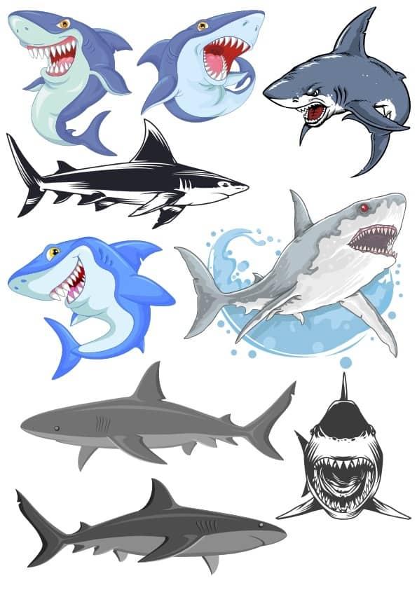 Shark 3 set (cdr)